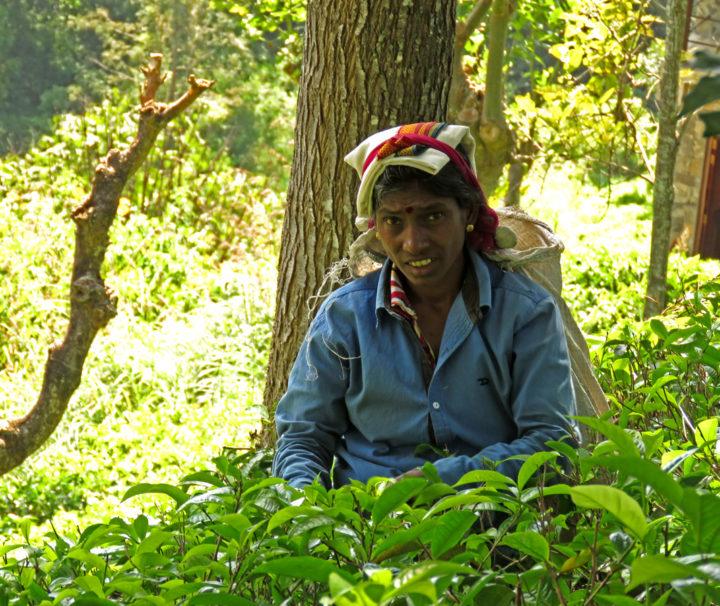 Sri Lanka Reise Rundreise