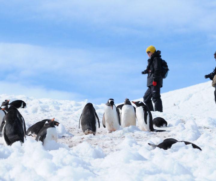 Antarktis Reise Kreuzfahrt Halbinsel
